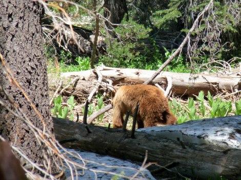 oso Yosemite