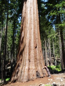 secuoya Yosemite